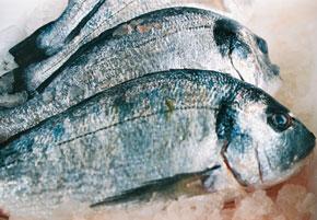 mf-fischmarkt